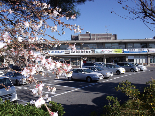 旧土浦市役所本庁舎の冬桜